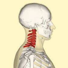 neck injuries Cervical Spine Injuries (Neck Injuries) Cervical Vertabrae
